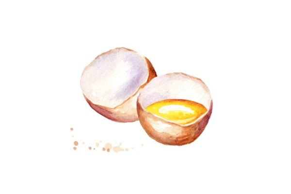 Illustration Eier